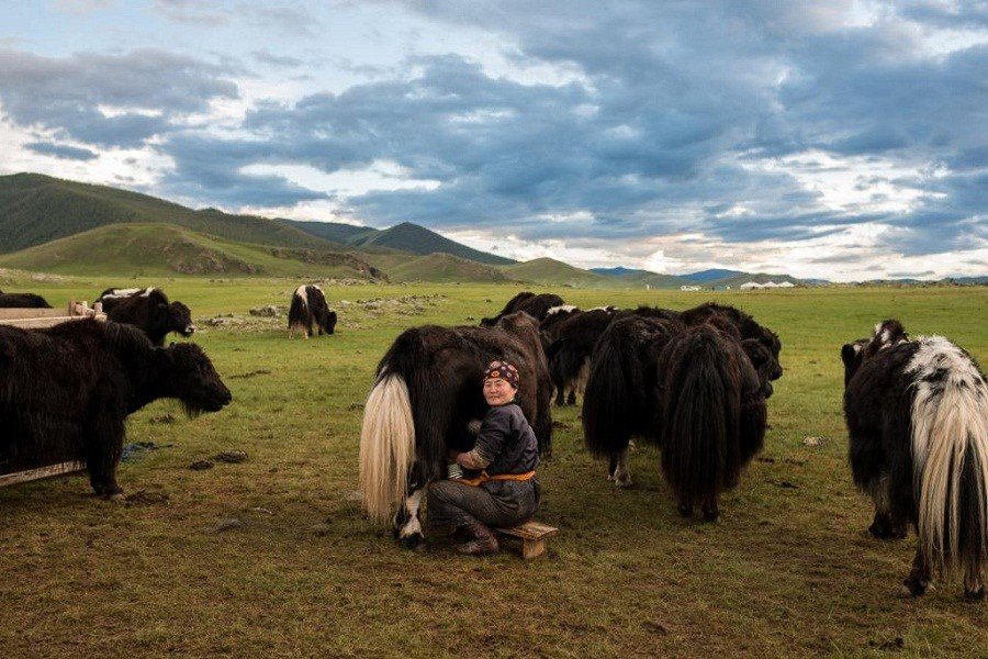 yak_breeder_family_treasure_of_the_northernmongolia